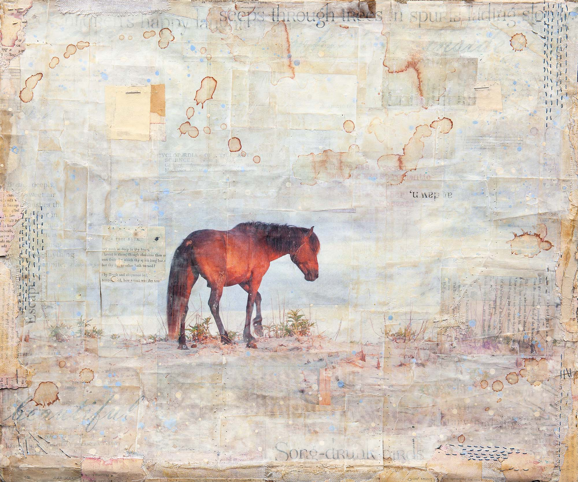horse assateague island tana lopez